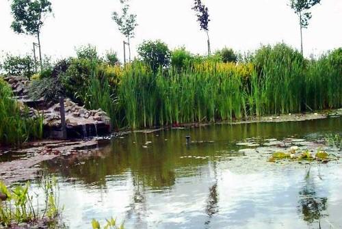 Grote natuurvijver for Vijverpomp voor grote vijver